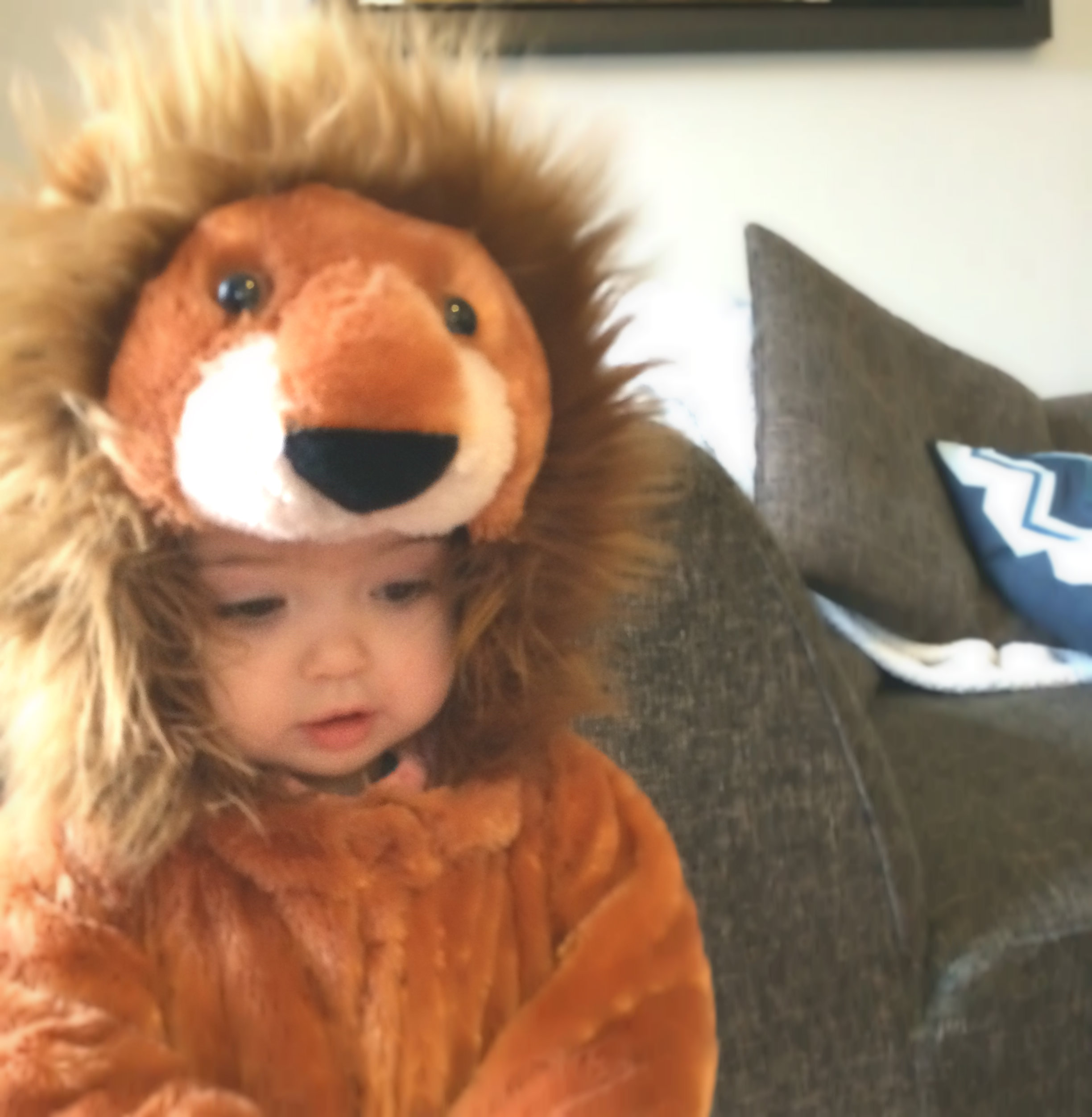 Mia the lion
